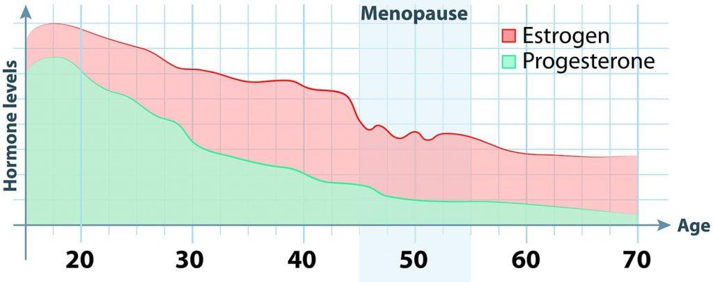 estrogen and progesterone timeline graph